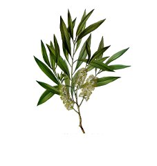 huile-essentielle-tea-tree-bio
